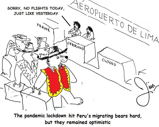 During the pandemic, migrating bears are stuck without a flight at Lima airport